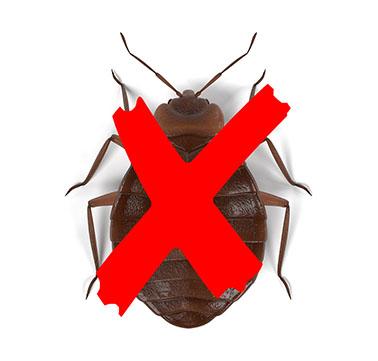 Dites STOP aux punaises de lits avec des professionnels de la détection et de désinfection.
